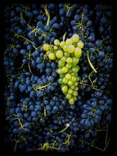 A great pic from Clonakilla showing a Shiraz Viognier blend in its natural state.