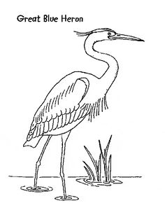Great Blue Heron color page, animal coloring pages - Animal Town - Great Blue Heron free printable coloring pages animals - color sheet - animal coloringbook Fabric Painting, Painting On Wood, Painting & Drawing, Watercolor Bird, Watercolor Paintings, Bird Template, Bird Coloring Pages, Blue Heron, Bird Drawings