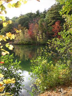 Walden Pond 2009 IMG_2799 by geoferrier, via Flickr