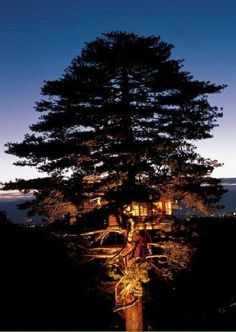 Tree House at dusk http://www.apartmenttherapy.com/amazing-treehouses-by-la-caban-120872 #tree #house #treehouse