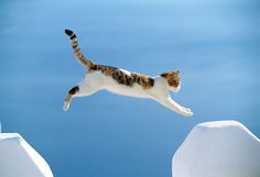 Red Calico Tabby Greek Island Cat Jumping Over Gap In White Wall  Photographer: 	Klein-Hubert/KimballStock
