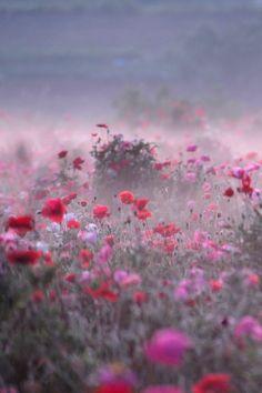 tulipnight: Poppy Field on Misty Morning by Teruo Araya