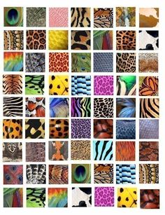 Animal and Insect skin patterns clip art collage sheet 1 INCH squares for pendants magnets TIGER LEOPARD SNAKE PEACOCK insects ETC      THESE