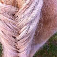 Horse taile ideas