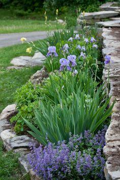 aménagement-petit-jardin-iris-saponaire-faux-basilic