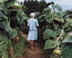 Sheron Rupp // Trudy in Annie's Sunflower Maze, Amherst, MA, 2000