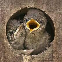 Afbeeldingsresultaat voor vogels voeren in winter