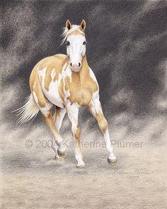 Paint Horse Pencil Drawings   Katherine Plumer Fine Art: Horse Drawings: Tru Kings Gold