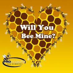 Happy Bee Day...I mean V-Day - from Pro Pacific Bee Removal!