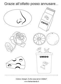 I cinque sensi (le schede) - Fantavolando Cards, Baby, Winter Time, Five Senses Preschool, Rome, Spring, November, School, Maps