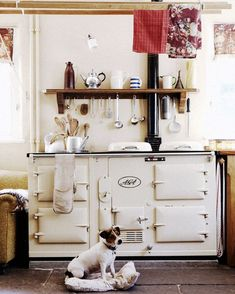perfect little vignette: vintage cream aga stove, linen dishtowels, open wood shelving,and a little jack russell terrier warming himself on his bed