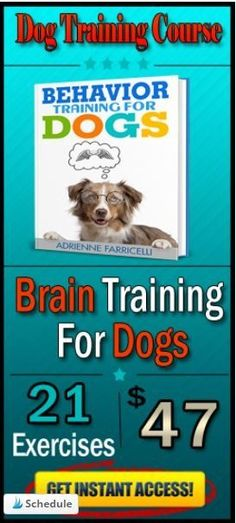 the best dog brain training online Dog Training Treats, Training Your Puppy, Brain Training, Dog Training Tips, Irish Wolfhound Dogs, Dog Psychology, Brain Games For Dogs, Dogs Online, Dog Steps