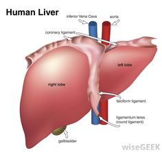 WHAT IS LIVER TRANSPLANTATION?