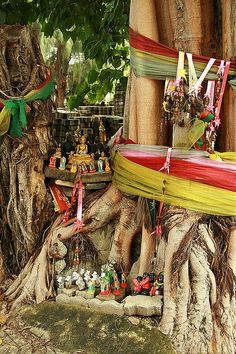 Sacred Bodhi Tree shrine, love the way the colorful wrappings of this sacred space echo the hints of silk and thread. Zen, Sri Lanka, Namaste, Bodhi Tree, Les Religions, Spiritus, Meditation Space, Pilgrimage, India