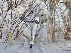 Russian sniper in winter camouflage with SVD rifle. Military Special Forces, Military Police, Military Camouflage, Usmc, Ghost Soldiers, Ghillie Suit, Coyote Hunting, Special Ops, Guns And Ammo