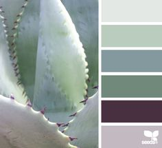 Succulent Tones - http://design-seeds.com/index.php/home/entry/succulent-tones16