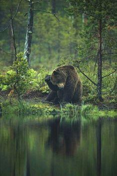 Bear Scratches His Head!