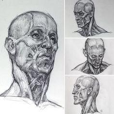 Anatomy studies after Mr. @natee_kev's ecorche. #drawing #sketchbook