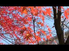 ビデオ(動画)撮影テスト:Canon PowerShot SX60 HS - YouTube