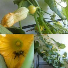 Mehiläinen työssään ☺
