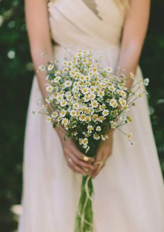 Simple, sweet, beautiful chamomile bouquet.