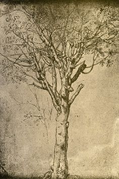 Study the masters. Study their work some more. Look at a tree. (Drawing a Tree) - Leonardo da Vinci Michelangelo, Renaissance Kunst, Illustration Art, Illustrations, Pierre Auguste Renoir, Art Plastique, Tree Art, Amazing Art, Find Art