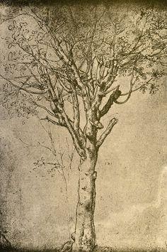 Dibujo de un árbol (Drawing a Tree) - Leonardo da Vinci