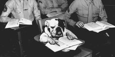 Back in 1954, Pvt. Jiggs diligently takes notes during a military lecture.