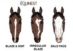 Rare Horse Markings Face