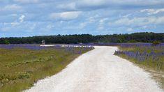 Sysneudd | Gotland.net