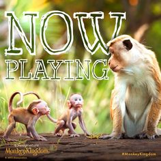 The gang's all here for #MonkeyKingdom, now in theatres!  See the movie, make a difference now.  http://di.sn/60064CyM