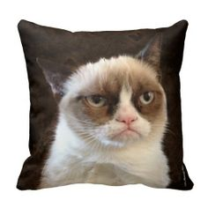 ** Learn more by visiting the image … Rag Doll Cat Facts Grumpy Cat Brown Pillow. ** Learn more by visiting the image – Grumpy Cat Brown Pillow Kermit, Neko, Pembroke Welsh Corgi Puppies, Gothic, Grumpy Cat Humor, Grumpy Cats, Cats Meowing, Ragdoll Cats, Siamese Cats