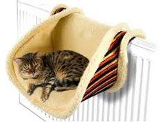 Risultati immagini per cucce per gatti