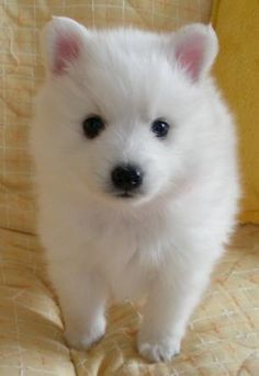 that is the cutest white puppy i'v ever seen soooooooooooooooooooooooooooooooooooooooooooooooooooooooooooooooooooooooooooooooooooo cuteeeeeeeeeeeeeeeeeeeeeeeeeeeeeeeeeeeeeeeeeeeeeeeeeeeeeeeeeeeeeeeeeeeeeeeeeeeeeeeeeee