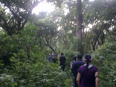Jungle Walk   Chitwan Jungle- Nepal.