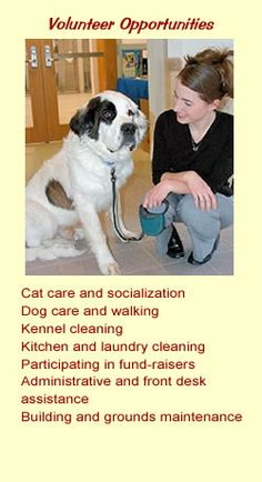 e60460aecd46a 31 Best Humane Society Volunteer ideas images
