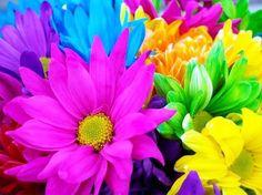 Festival de Flores de Embu das Artes