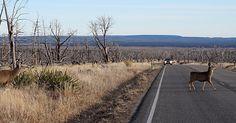 Deer Crashes through Wisconsin Man's Windshield and Injures Him - http://rozeklaw.com/2015/12/21/deer-crashes-wisconsin-mans-windshield-injures/ - http://rozeklaw.com/wp-content/uploads/2015/12/Dollarphotoclub_93988281.jpg
