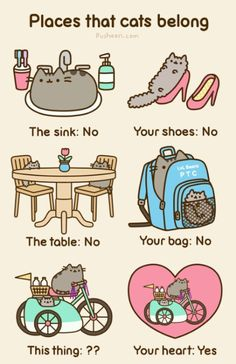 Even though it says no, my cat could still be found in all those places.