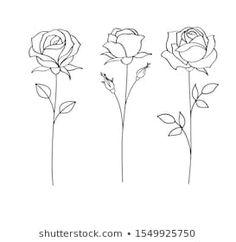 Portfólio de fotos e imagens stock de Gizele | Shutterstock Line Art Tattoos, Tattoo Drawings, Art Drawings, Rose Rib Tattoos, Drawing Drawing, Tattoo Sketches, Rose Line Art, Line Art Flowers, Rose Sketch