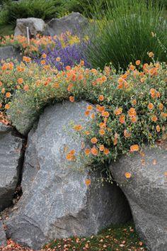 Rock garden: Bliss Garden Design's Design Ideas