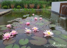 Moja codzienność - ogród Oli - strona 1476 - Forum ogrodnicze - Ogrodowisko