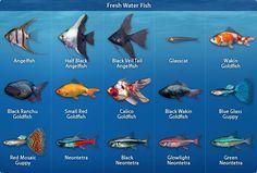 Types of freshwater aquarium fish