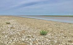 Salt marsh area, De Zwarte Haan, Friesland (NL) Salt Marsh, The Province, Trail, Stage, Coast, River, Beach, Plants, Outdoor