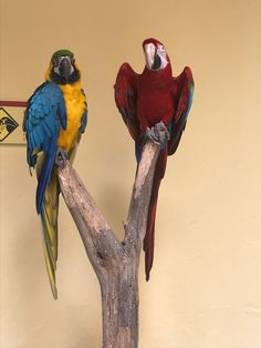 Parrot, Bird, Animals, Islands, Parrot Bird, Animaux, Parrots, Birds, Animal
