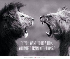 true love quote with lion | If you want to be a lion you must train with lions Picture Quote #1