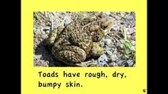 frogs and toads for kids - YouTube