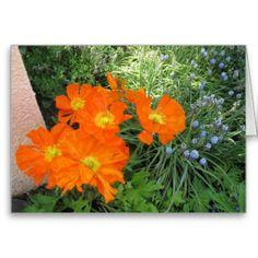 California #Poppies All Occasion Card http://www.zazzle.com/rinchen365flower*  #garden