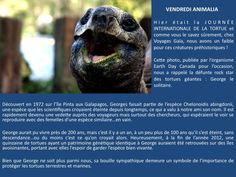 Happy international turtle day ! Bonne journée internationale de la tortue !