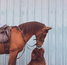 Newfoundland dog with horse Love this pic ❤ Friends. Pretty Horses, Horse Love, Beautiful Horses, Animals Beautiful, Cute Horses, Beautiful Images, Beautiful People, Farm Animals, Animals And Pets